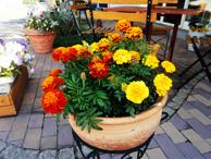 園芸クラブでは野菜やお花を育てています。園芸好きな方、募集中です。